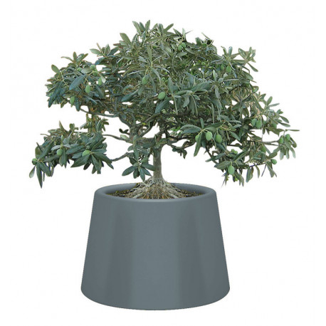 Pot de fleurs Sardana QUI EST PAUL ?